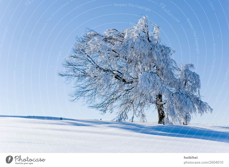 Sky Vacation & Travel Nature Plant Blue Beautiful White Landscape Sun Tree Loneliness Calm Winter Mountain Cold Natural