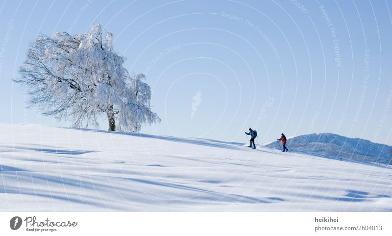 Nature Vacation & Travel Landscape Sun Tree Relaxation Calm Joy Winter Far-off places Mountain Cold Meadow Snow Sports Happy