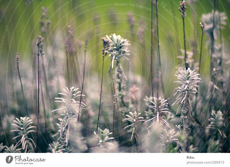 Nature Beautiful Plant Flower Leaf Environment Cold Autumn Garden Blossom Park Natural Growth Bushes Transience Blossoming