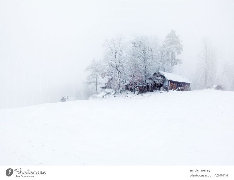 Cold cold silence Calm Meditation Winter Snow Winter vacation Environment Nature Tree Observe Going Listening Vacation & Travel Esthetic White Happy Contentment