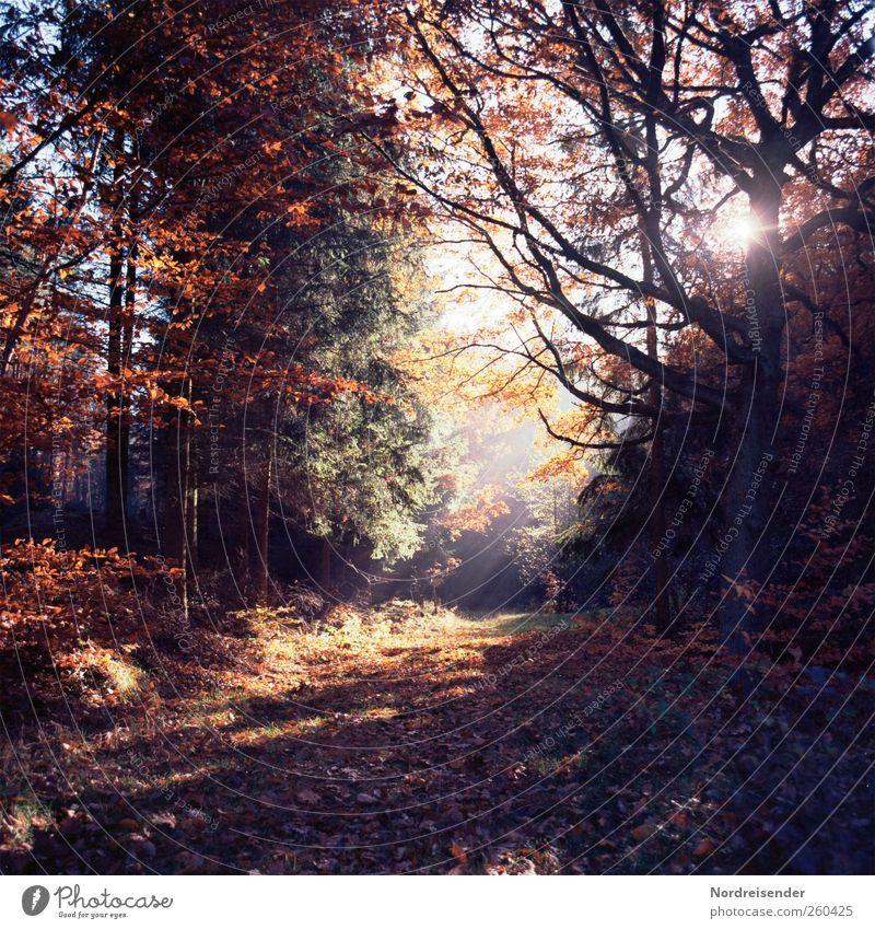 Tree Plant Sun Calm Forest Relaxation Autumn Dark Landscape Lanes & trails Warmth Dream Moody Fog Glittering Hiking