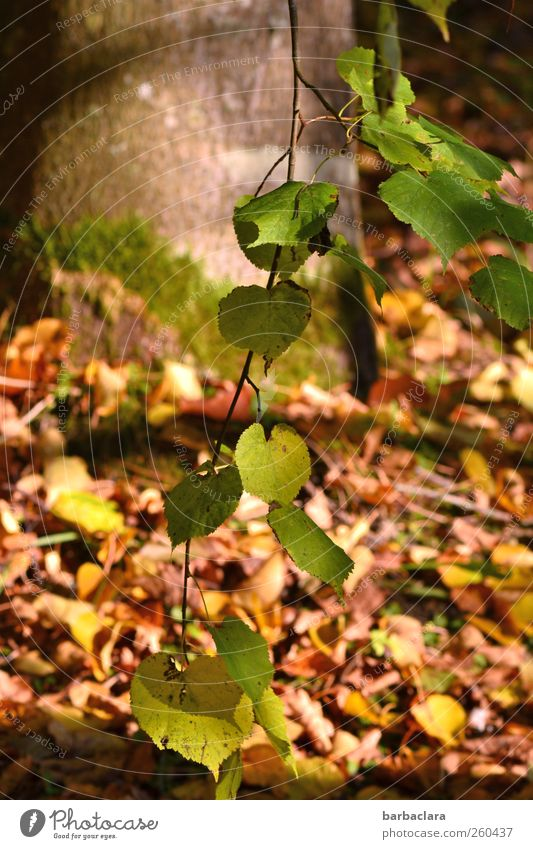 As time goes passing by Nature Sunlight Autumn Beautiful weather Tree Leaf Oak tree Park To fall Hang To dry up Natural Many Brown Yellow Green Moody
