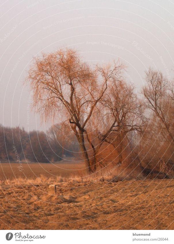 autumn day Plain Field Tree Landscape Americas Nature Colour