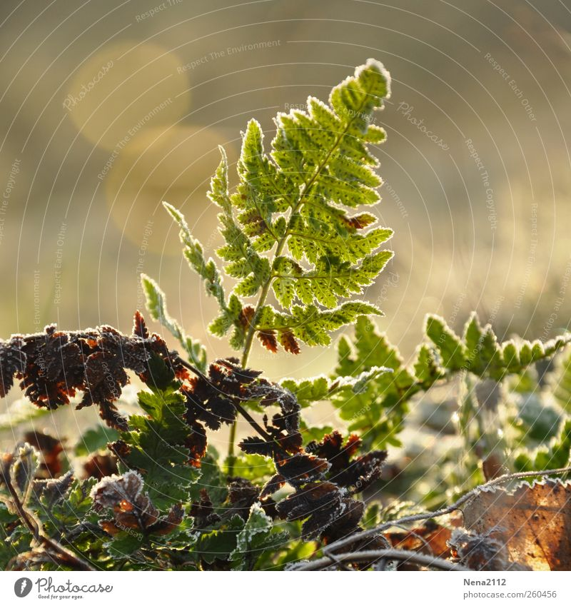 New Life Environment Nature Plant Spring Winter Climate Weather Fog Ice Frost Bushes Fern Leaf Wild plant Growth Green Fragile Fresh Colour photo Exterior shot