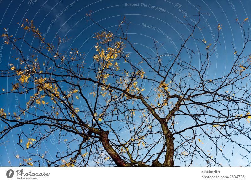 Tree in autumn Branch Leaf Worm's-eye view Gold Autumn leaves Autumnal Sky Heaven Light October Sun Cloudless sky Twig Forest Deserted Copy Space