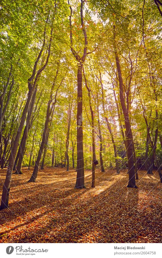 Scenic forest at sunrise. Beautiful Vacation & Travel Tourism Trip Adventure Expedition Camping Sun Environment Nature Landscape Plant Autumn Tree Leaf Park