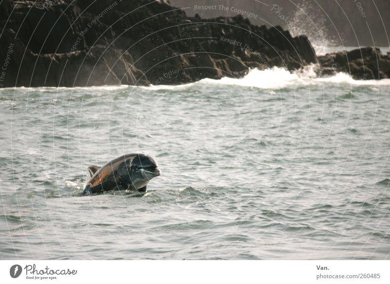 Nature Water Beautiful Ocean Animal Environment Gray Coast Wind Rock Swimming & Bathing Wild Wild animal Free Esthetic Observe