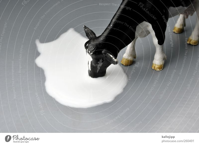 milchbuby Drinking Milk Agriculture Forestry Animal Cow 1 Cattle Toys plastic toy Statue Colour photo Studio shot Close-up Artificial light Light Shadow Blur