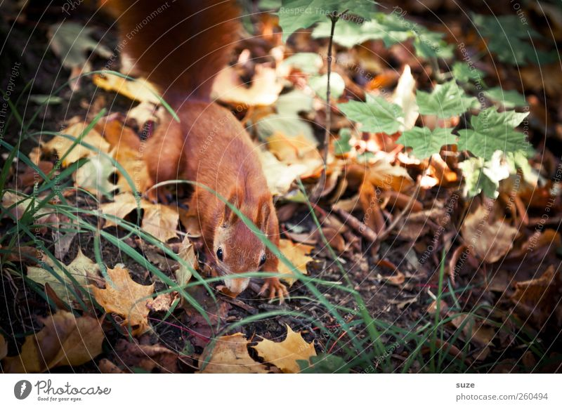 Nature Green Red Leaf Animal Forest Environment Meadow Autumn Small Brown Wild animal Beautiful weather Observe Cute Search