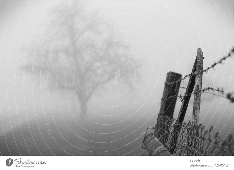 grey in grey Landscape Fog Tree Wood Gloomy Captured Fence Barbed wire fence Drift Border Grief Loneliness Deserted Old Wire netting fence Dismissive Animosity