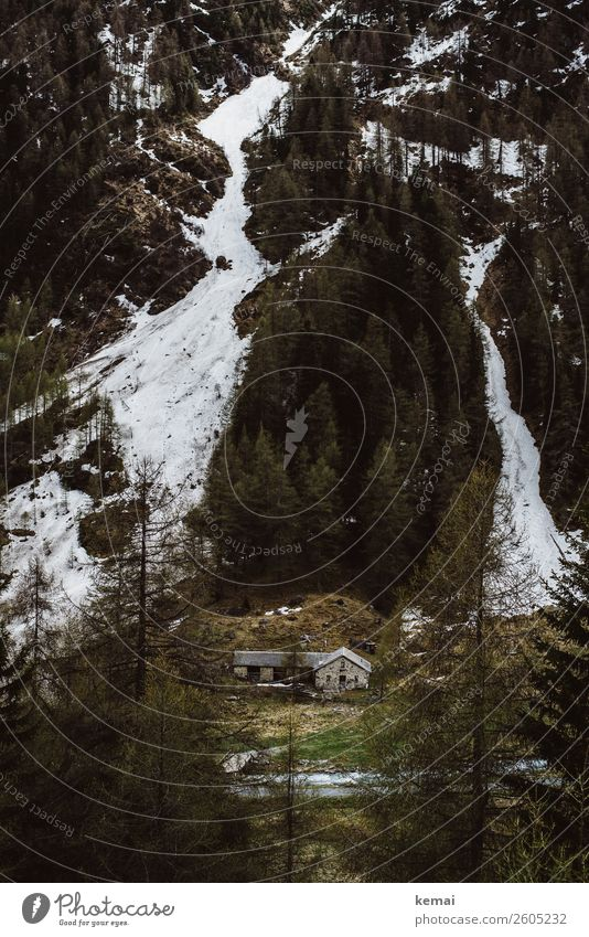 Nature Old Green Landscape Tree House (Residential Structure) Loneliness Calm Forest Mountain Dark Snow Freedom Ice Adventure Authentic