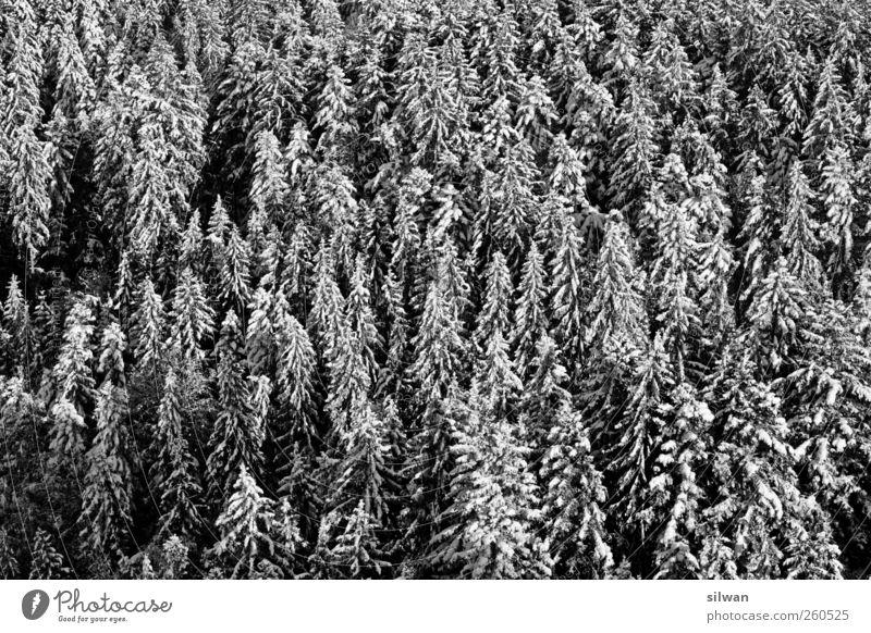winter - needle - forest Nature Landscape Plant Winter Beautiful weather Ice Frost Snow Tree Forest Bantigen Switzerland Deserted Wood Sleep Dark Natural Gloomy