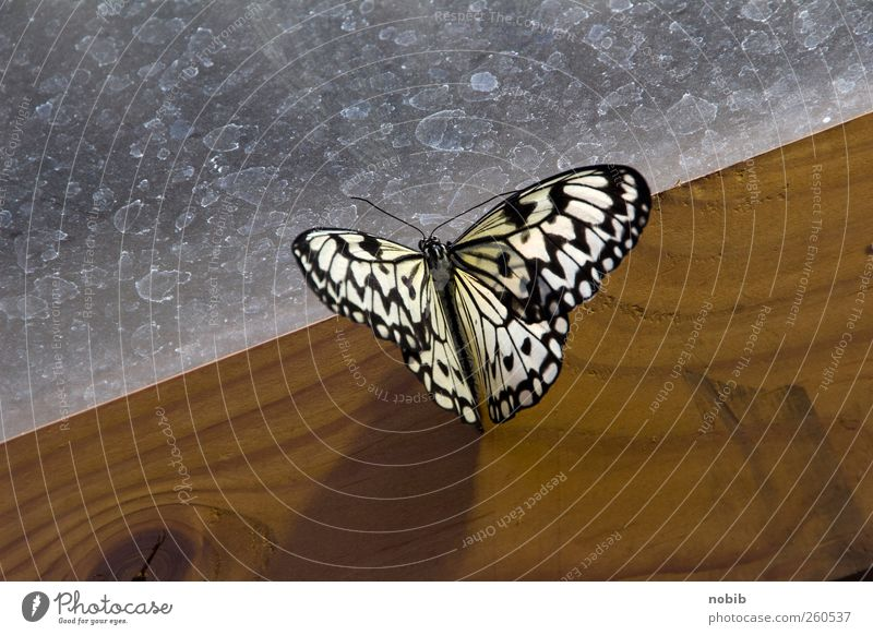 Nature White Beautiful Animal Black Wood Movement Gray Garden Brown Glass Esthetic Zoo Butterfly Furniture Exotic