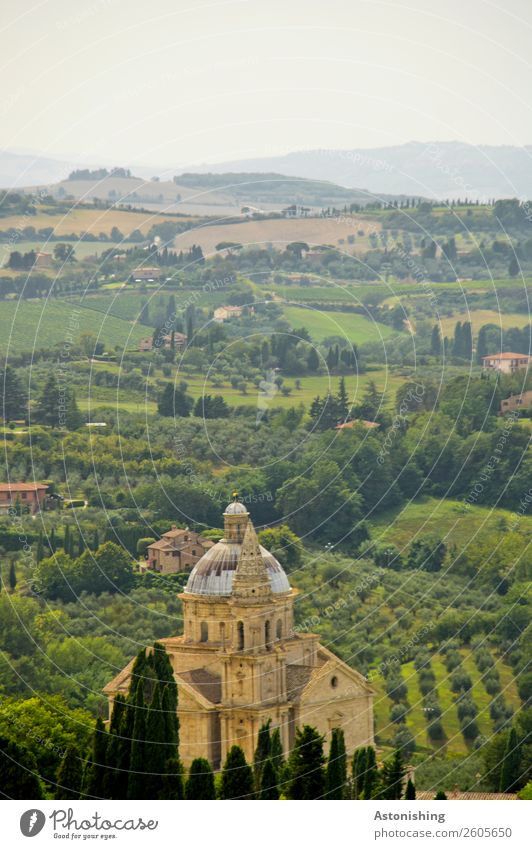 Church in wine Environment Nature Landscape Plant Sky Summer Weather Beautiful weather Tree Bushes vine plant Wine Meadow Field Hill Montepulciano Tuscany Italy