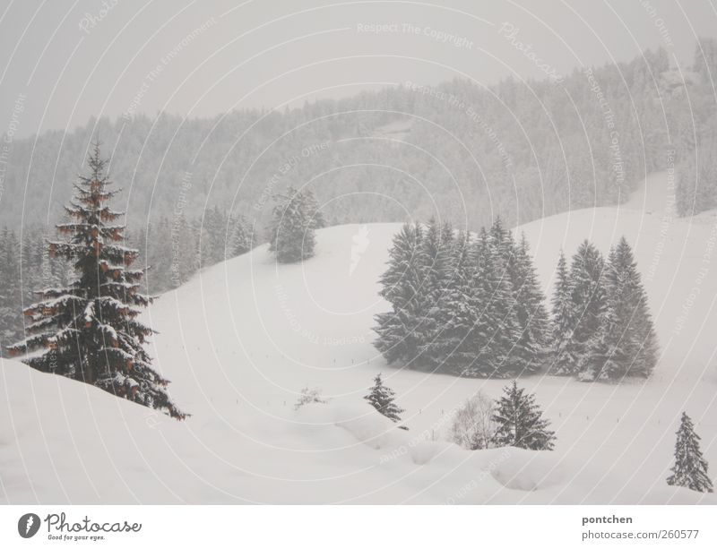 Snowy landscape in the Allgäu. Forest in winter Nature Landscape Winter Bad weather Fog Ice Frost Snowfall Plant tree green White Fir tree Snowscape chill