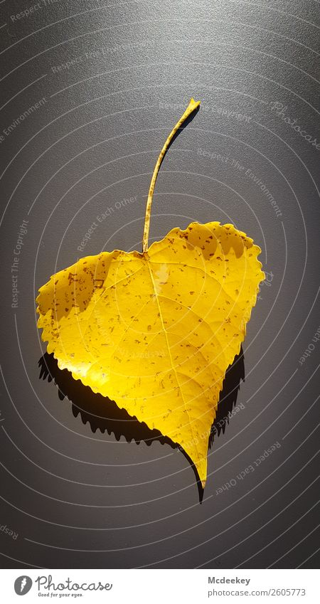 Autumn is coming Nature Plant Tree Leaf Heart Illuminate Faded Authentic Exceptional Simple Gigantic Happy Large Hip & trendy Beautiful Kitsch Sustainability