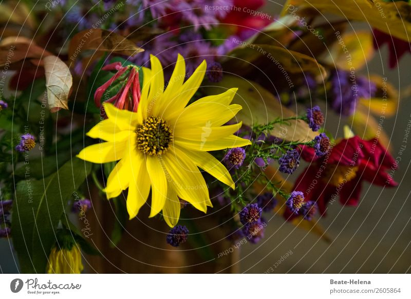 A little flower greeting Style Beautiful Feasts & Celebrations Birthday Nature Flower Leaf Blossom Blossoming Fragrance Looking Blue Yellow Green Red Emotions