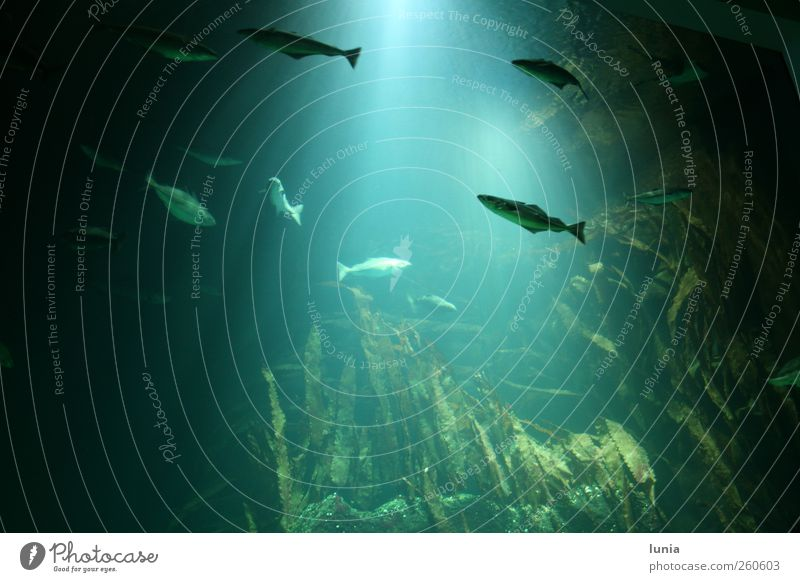 floating fish Water North Sea Animal Fish Aquarium Group of animals Stone Illuminate Swimming & Bathing Large Blue Green Adventure Relaxation Serene