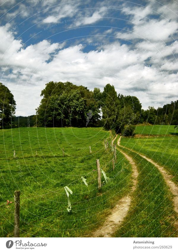 the way in Environment Nature Landscape Plant Sky Clouds Summer Weather Beautiful weather Tree Grass Bushes Foliage plant Meadow Hill Lanes & trails Blue Green