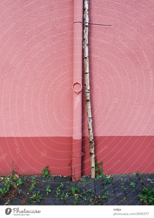 strong bond Tree Birch tree Tree trunk Deserted Wall (barrier) Wall (building) Facade Rain gutter Thin Firm Long Pink Relationship Bound Cable strap May tree