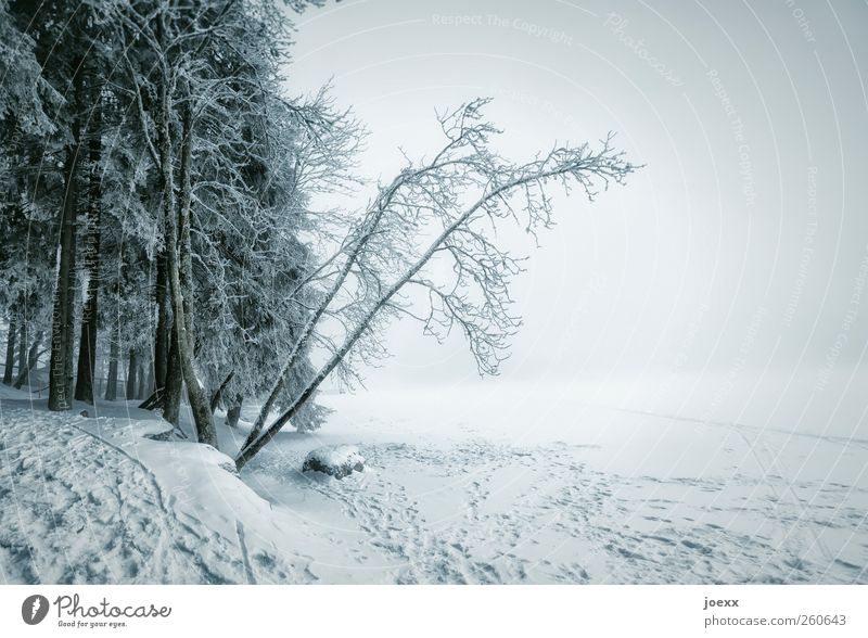 inquisitiveness Nature Landscape Clouds Winter Bad weather Storm Fog Ice Frost Snow Forest Lake Bright Cold Blue Black White Idyll Mummelsee Lake Frozen