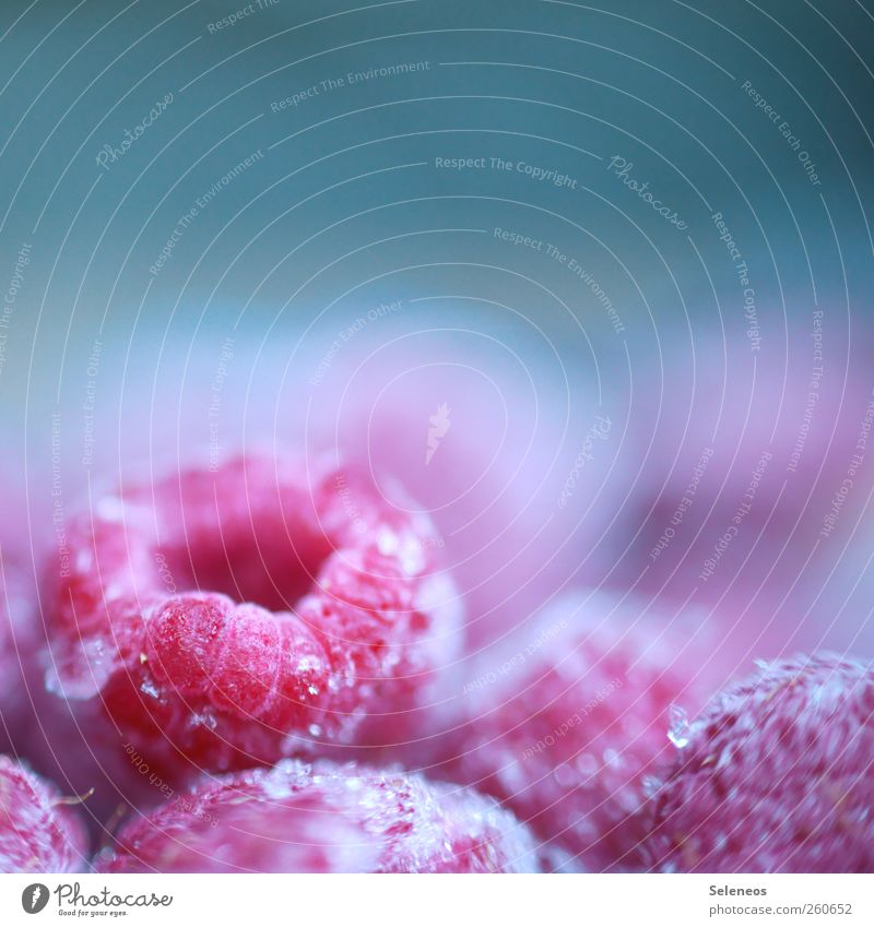 cold fruit Food Fruit Raspberry Nutrition Organic produce Winter Ice Frost Freeze Fresh Healthy Cold Small Appetite Frozen Colour photo Interior shot Close-up