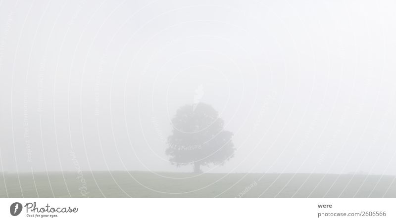 Tree on a meadow in the morning mist Nature Fog Stand cloudy sky copy space dust field landscape light Manure heap misty misty fields morning crap morning sun