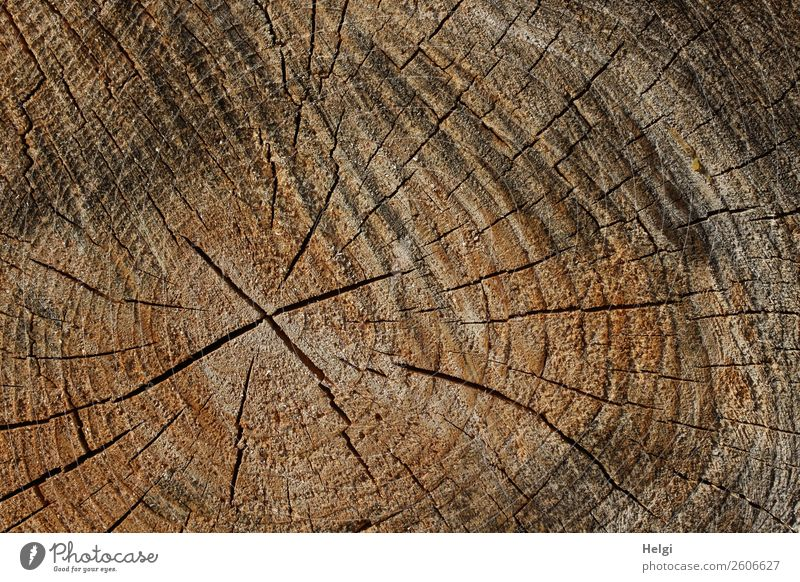Cut surface of a tree trunk with annual rings and cracks Environment Nature Plant Tree trunk Annual ring Forest wood Old To dry up Authentic Uniqueness natural