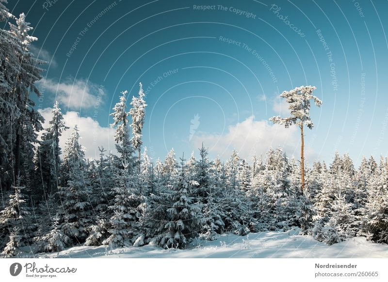 Nature Blue White Plant Relaxation Landscape Clouds Winter Forest Cold Snow Moody Ice Climate Beautiful weather Trip