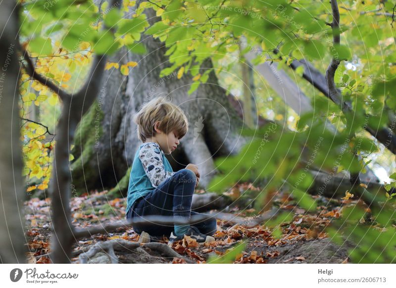 little boy sits on the forest floor and discovers treasures of nature Human being Masculine Child Boy (child) Infancy 1 3 - 8 years Environment Nature Landscape