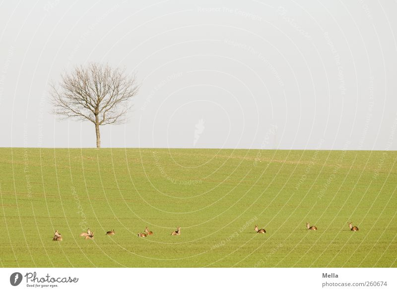 siesta Environment Nature Landscape Wild animal Roe deer Group of animals Herd Relaxation Lie Free Together Small Natural Green Freedom Idyll Break Calm Restful
