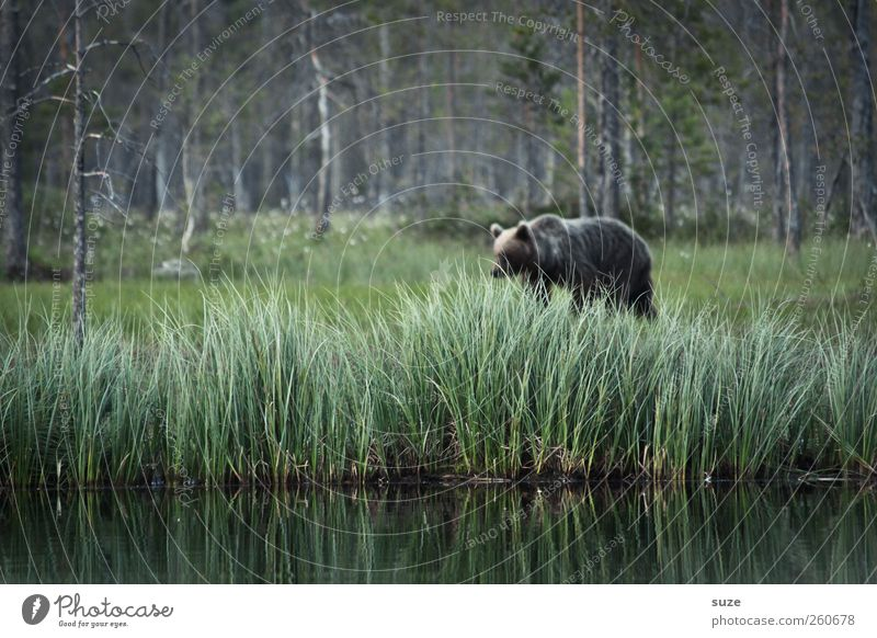 Nature Green Landscape Animal Forest Environment Meadow Grass Lake Brown Fear Wild Wild animal Threat Observe Lakeside