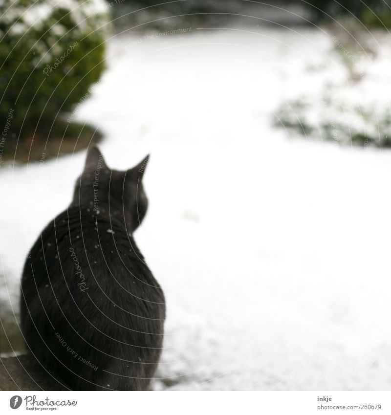 Cat Winter Animal Environment Cold Snow Emotions Lanes & trails Garden Snowfall Moody Park Baby animal Ice Wait Climate
