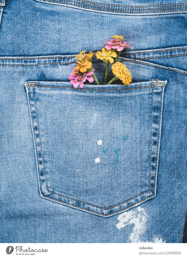 flowers in the back pocket of blue jeans Style Design Flower Fashion Clothing Jeans Old Blossoming Blue Yellow Colour Denim Consistency background casual