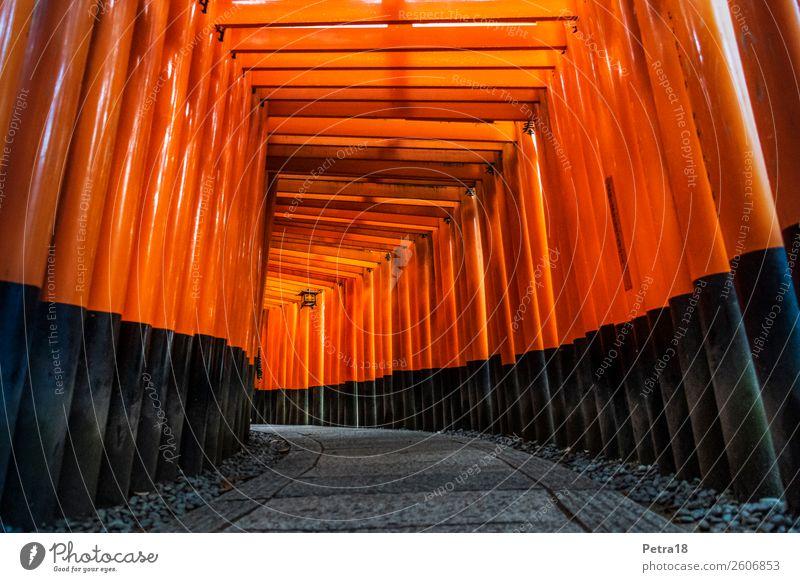 Fushimi-Inari Shrine Kyoto Vacation & Travel Tourism Trip Far-off places City trip Japan Asia Tourist Attraction Landmark Monument Wood Authentic Famousness