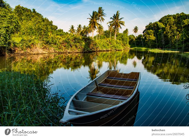 Vacation & Travel Nature Beautiful Landscape Tree Calm Far-off places Tourism Freedom Exceptional Watercraft Trip Idyll Adventure Bushes Fantastic