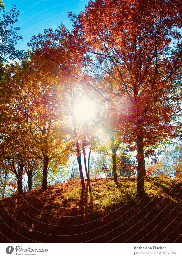 autumnal Nature Landscape Sky Sun Sunlight Spring Autumn Tree Park Forest Hill Illuminate Blue Brown Multicoloured Yellow Gold Gray Green Violet Orange Pink Red