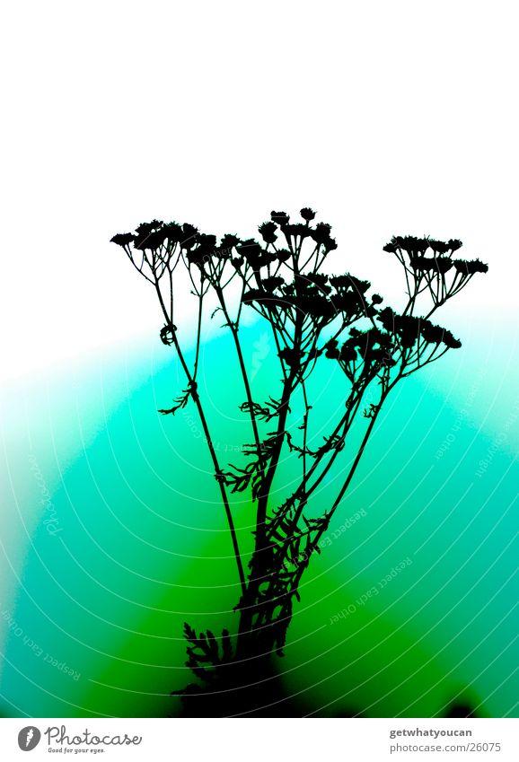 surreal Plant Back-light Multicoloured Unnatural Dark Blur Error Colour Bright Nature