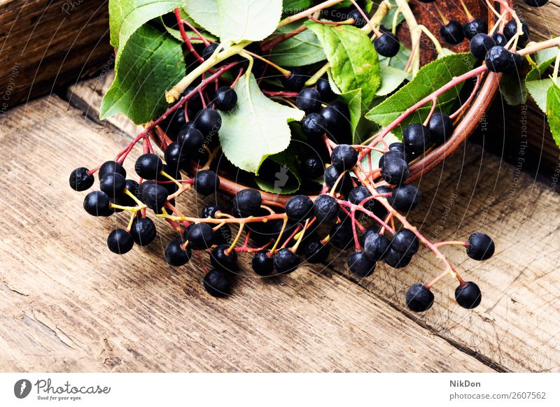 Chokeberry with leaf fruit chokeberry aronia nature branch plant ripe fresh natural healthy raw harvest bunch autumn aronia melanocarpa rowan black chokeberry