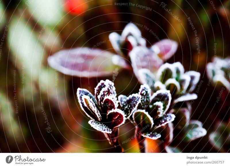 Nature Plant Winter Flower Leaf Environment Death Autumn Cold Landscape Garden Park Brown Weather Ice Climate