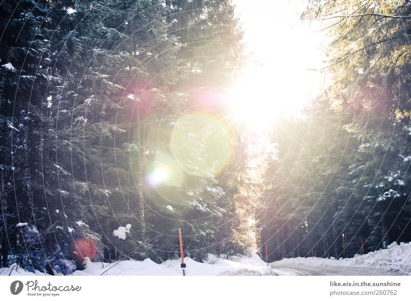 beautiful good morning! Trip Winter vacation Landscape Beautiful weather Ice Frost Snow Snowfall Tree Forest Alps Traffic infrastructure Street Glittering