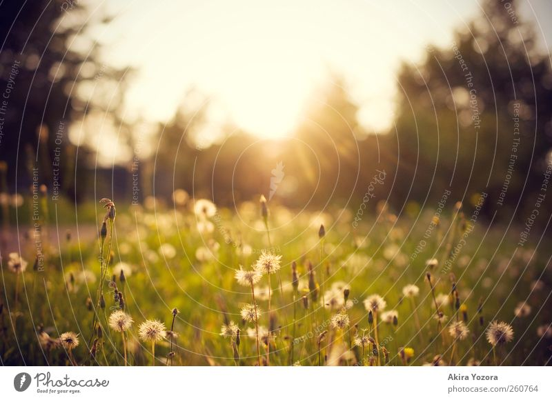 Sky Nature White Green Tree Sun Summer Flower Black Relaxation Meadow Autumn Landscape Grass Weather Leisure and hobbies