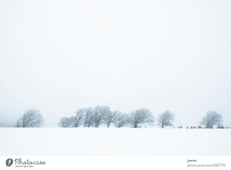 Sky Blue White Tree Winter Clouds Black Cold Snow Landscape Mountain Gray Bright Ice Field Fog