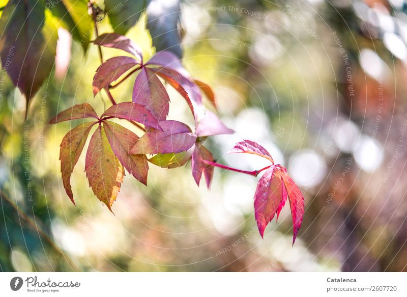 Nature Plant Beautiful Green Leaf Autumn Environment Garden Orange Brown Pink Moody Design Gold Esthetic Happiness