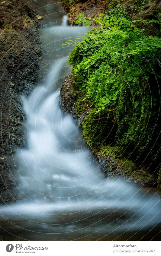 Small cascade flowing in the forest Beautiful Vacation & Travel Tourism Environment Nature Landscape Park Forest River Waterfall Stone Movement Fresh Wet
