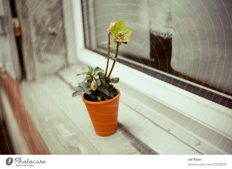 Flowers. Just for you! Plant Flowerpot Window Window board Natural Warm-heartedness Thrifty Colour photo Day Long shot
