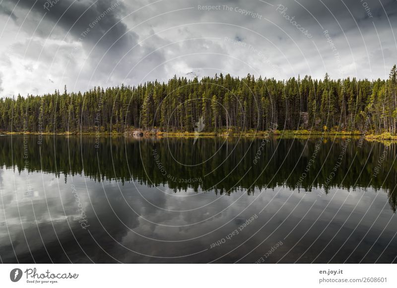 Cloudy Vacation & Travel Environment Nature Landscape Sky Clouds Storm clouds Forest Lakeside Threat Dark Uniqueness Grief Loneliness Calm Symmetry Dream
