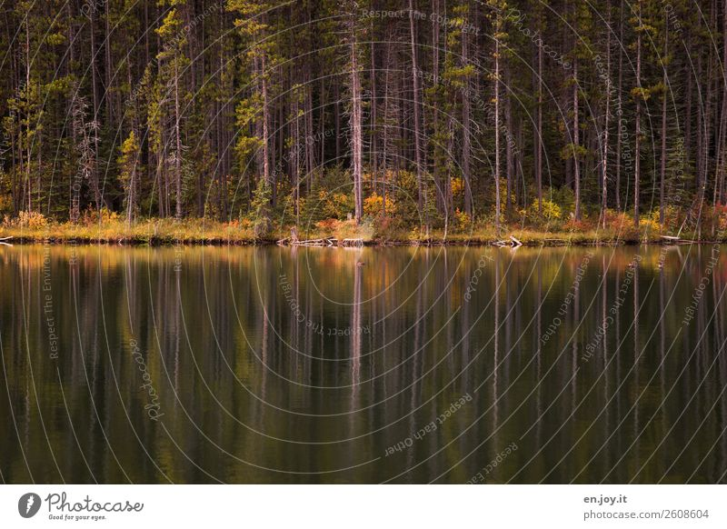 edge of the forest Vacation & Travel Trip Nature Landscape Plant Autumn Tree Forest Lakeside Calm Sadness Idyll Grief Environment Colour photo Subdued colour