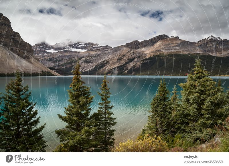 Bow Lake Vacation & Travel Trip Freedom Mountain Nature Landscape Sky Clouds Summer Autumn Fir tree Coniferous trees Rocky Mountains Glacier Lakeside bow lake