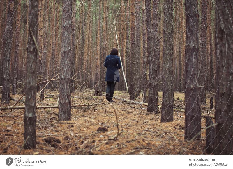 Human being Woman Nature Youth (Young adults) Loneliness Calm Adults Forest Autumn Landscape Emotions Moody Going Search 18 - 30 years Curiosity